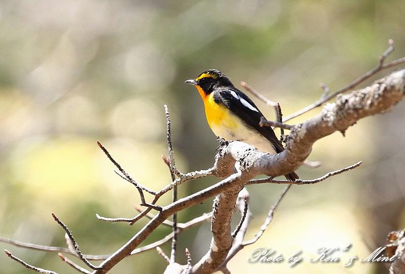 二日目の鳥さん達♪_e0218518_19525178.jpg