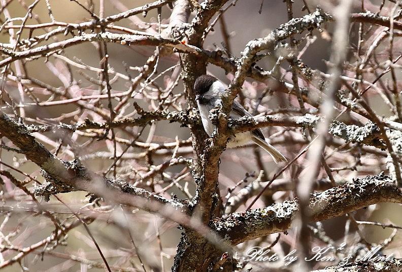 二日目の鳥さん達♪_e0218518_19543231.jpg