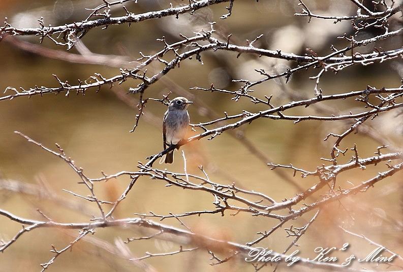 二日目の鳥さん達♪_e0218518_19551232.jpg
