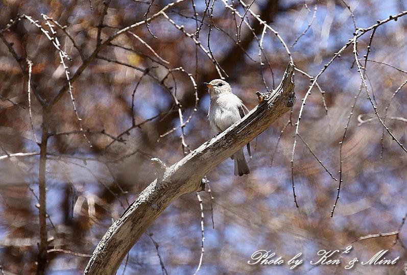 二日目の鳥さん達♪_e0218518_19555909.jpg