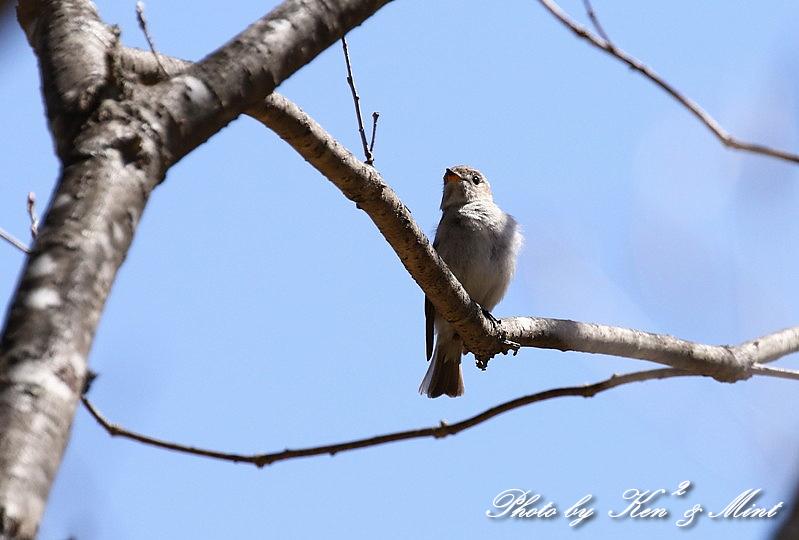 二日目の鳥さん達♪_e0218518_19564913.jpg