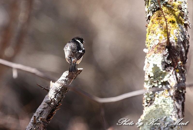 二日目の鳥さん達♪_e0218518_19582589.jpg