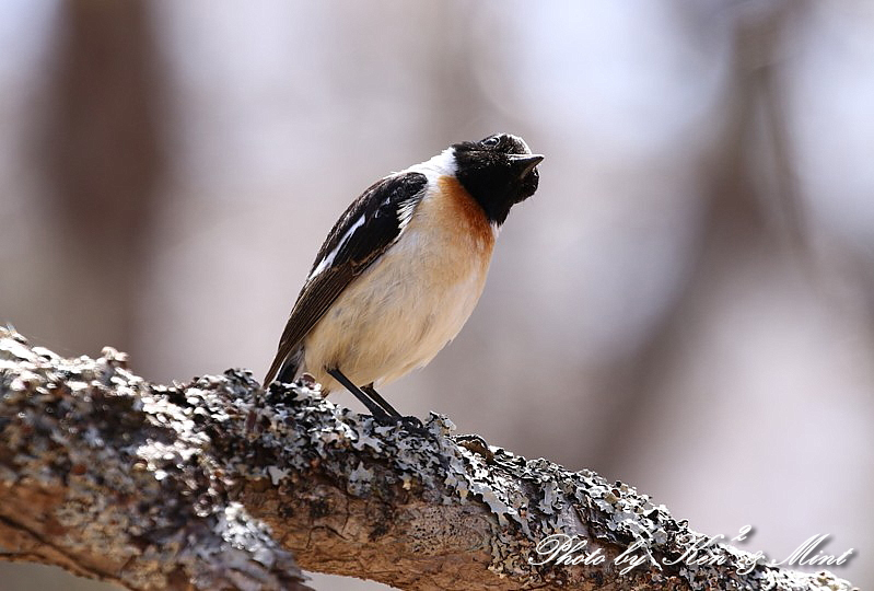 二日目の鳥さん達♪_e0218518_19590022.jpg