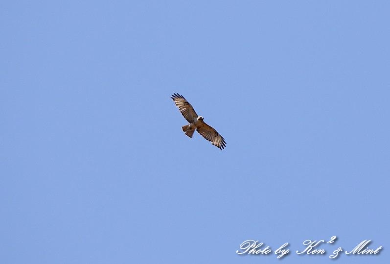 二日目の鳥さん達♪_e0218518_19594943.jpg