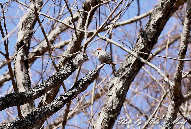 二日目の鳥さん達♪_e0218518_20003583.jpg
