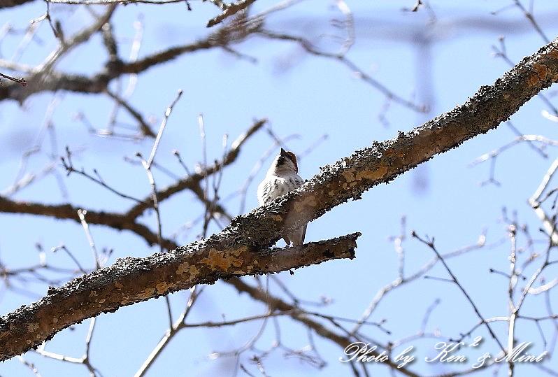 二日目の鳥さん達♪_e0218518_20025817.jpg