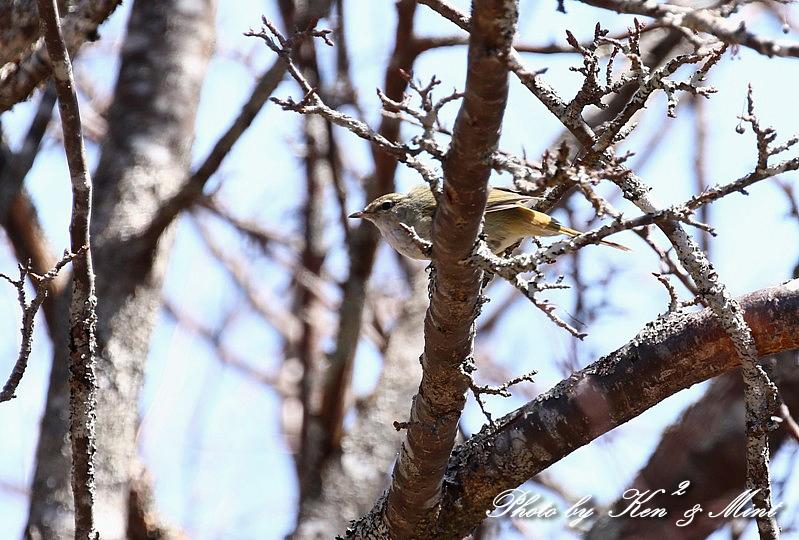 二日目の鳥さん達♪_e0218518_20035355.jpg