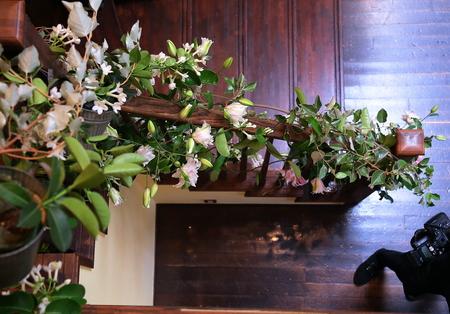 初夏の装花 一生に一度の素敵な一日に ザ・ハウス白金様へ_a0042928_20295045.jpg