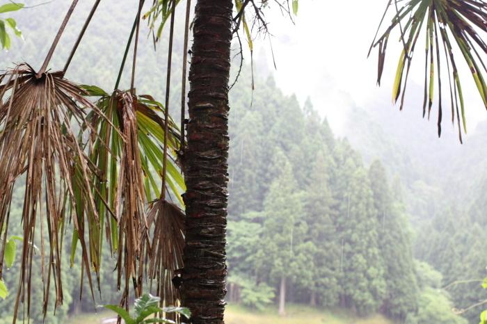 棕櫚山_d0210537_15100636.jpg