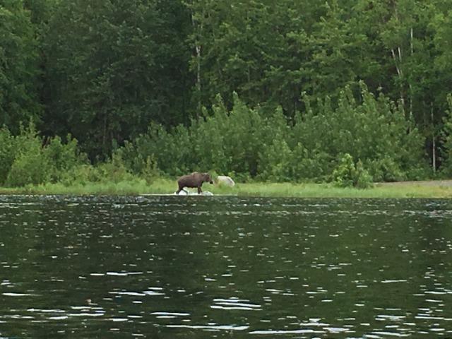 グースレイクでカヤック Kayak at Goose Lake_b0135948_15544656.jpg