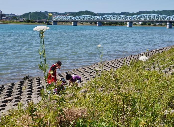 川のある風景 紀ノ川_b0093754_17474761.jpg