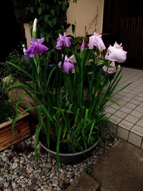 日常「春の陽気」_b0362459_14410055.jpg