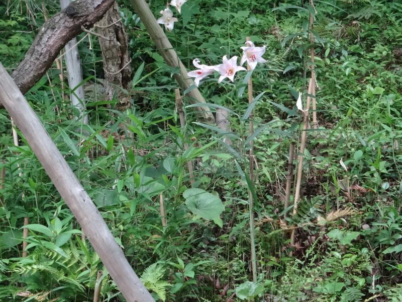 草刈りすればマムシに当たる・・・うみべの森を育てる会定例活動日・・・せんなん里海公園内うみべの森_c0108460_23341228.jpg