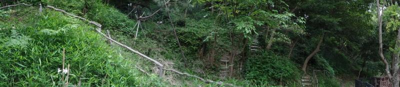 草刈りすればマムシに当たる・・・うみべの森を育てる会定例活動日・・・せんなん里海公園内うみべの森_c0108460_23351631.jpg
