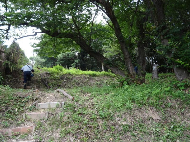 草刈りすればマムシに当たる・・・うみべの森を育てる会定例活動日・・・せんなん里海公園内うみべの森_c0108460_23440133.jpg