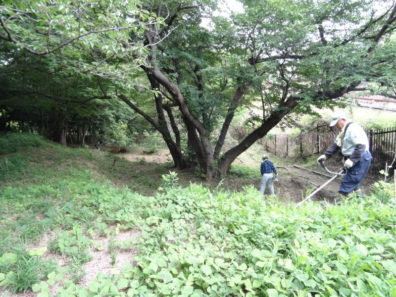 草刈りすればマムシに当たる・・・うみべの森を育てる会定例活動日・・・せんなん里海公園内うみべの森_c0108460_23442964.jpg