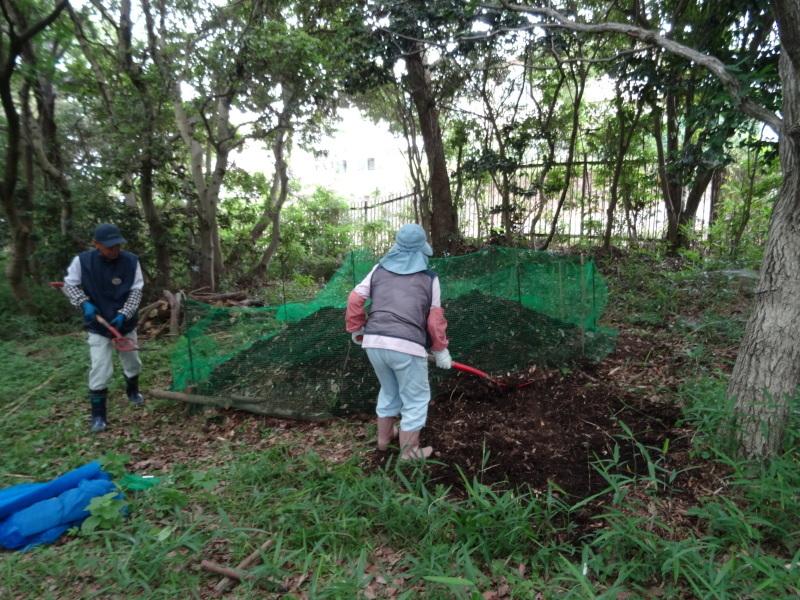 草刈りすればマムシに当たる・・・うみべの森を育てる会定例活動日・・・せんなん里海公園内うみべの森_c0108460_23452536.jpg