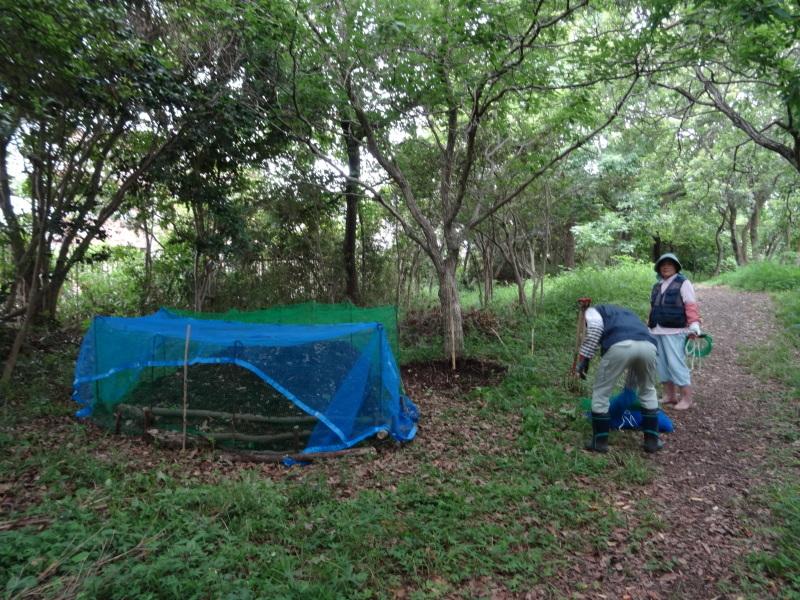草刈りすればマムシに当たる・・・うみべの森を育てる会定例活動日・・・せんなん里海公園内うみべの森_c0108460_23452713.jpg
