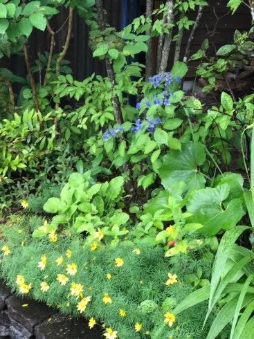 我が家の庭はローメンテGarden・・・・ノーメンテではありません。_b0137969_11071329.jpg