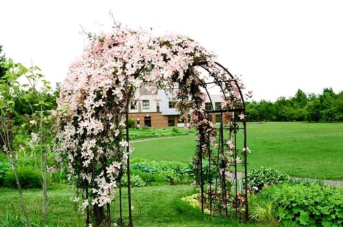 花ロード恵庭の登り藤とクレマチス・モンタナ_c0182775_1742865.jpg