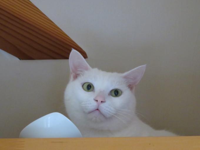 猫サミット(のん神様とメイ女王)_c0369492_12170860.jpg