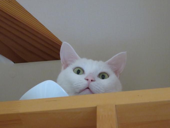 猫サミット(のん神様とメイ女王)_c0369492_12201423.jpg