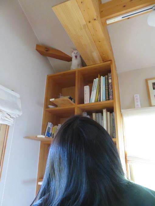 猫サミット(のん神様とメイ女王)_c0369492_12284262.jpg
