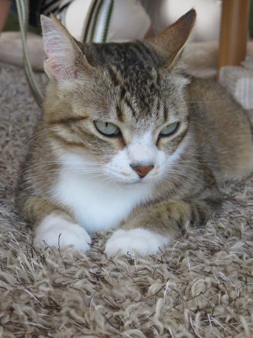 猫サミット(のん神様とメイ女王)_c0369492_12302932.jpg
