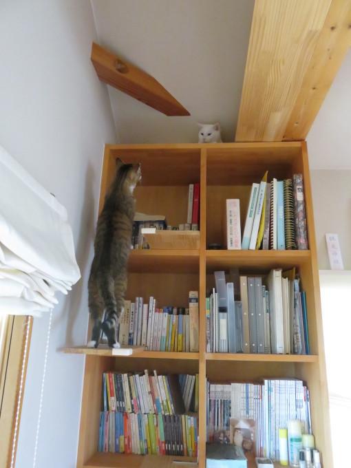 猫サミット(のん神様とメイ女王)_c0369492_12465049.jpg