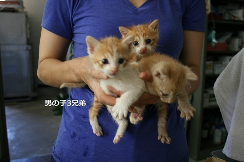 【移動先募集】センター(支所)収容の子猫・成猫(6/10訪問)_f0242002_22482325.jpg