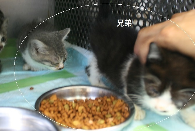 【移動先募集】センター(支所)収容の子猫・成猫(6/10訪問)_f0242002_22484410.jpg