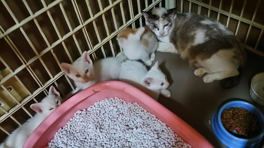 【移動先募集】センター(支所)収容の子猫・成猫(6/10訪問)_f0242002_22500923.jpg