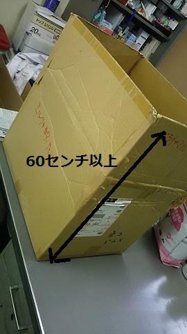【移動先募集】センター(支所)収容の子猫・成猫(6/10訪問)_f0242002_23261709.jpg
