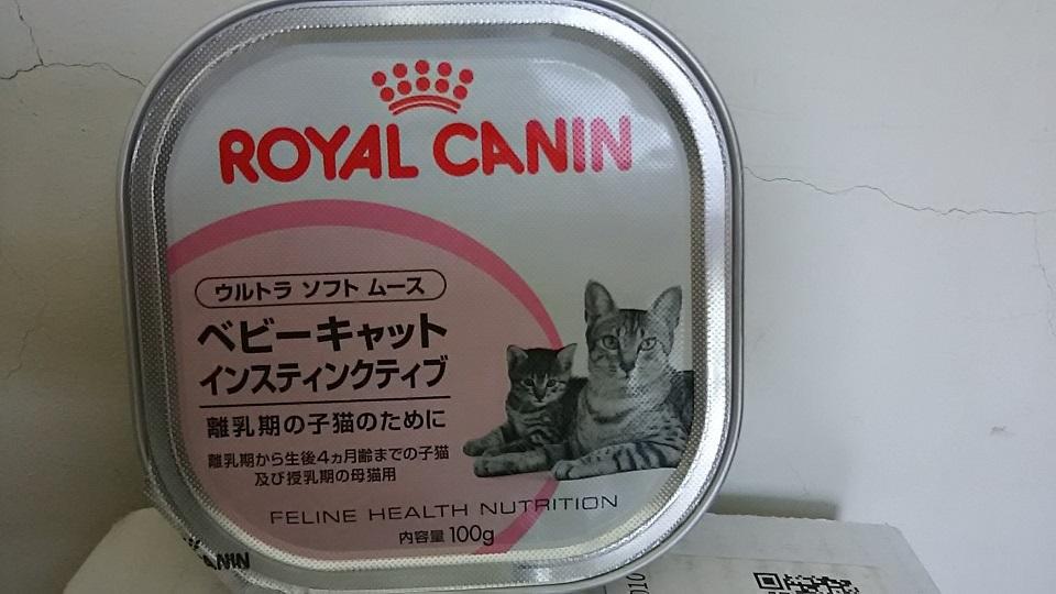 【移動先募集】センター(支所)収容の子猫・成猫(6/10訪問)_f0242002_23263009.jpg
