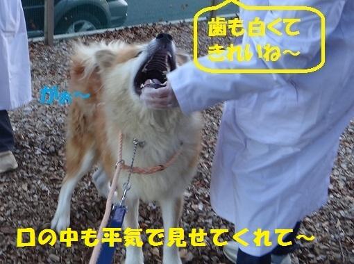 f0121712_16442088.jpg