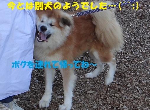 f0121712_16442788.jpg