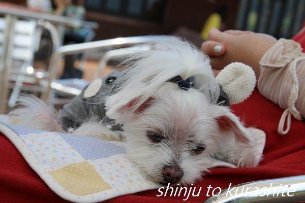 犬連れ箱根旅行Vol.3(プロローグ)_a0246523_16562662.jpg