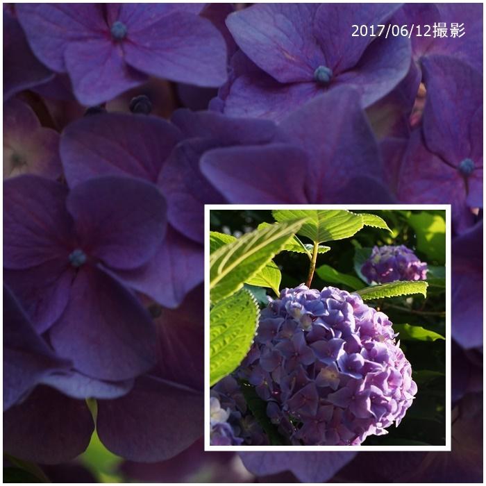 f0120433_20374434.jpg