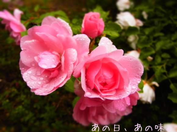 a0305046_10142919.jpg