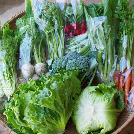 今週の野菜セット(6/13~6/17着)_c0110869_1252959.jpg