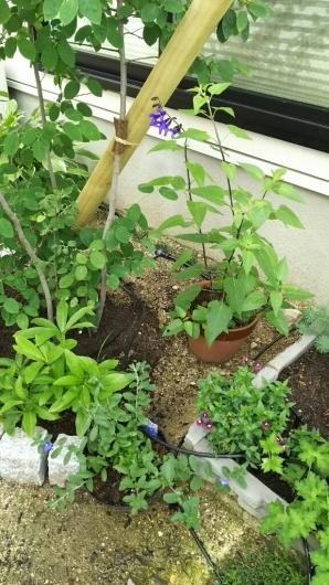 アクセントになる植物たち。_f0098671_12000673.jpg