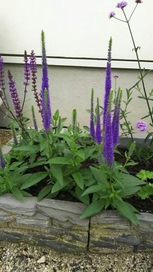アクセントになる植物たち。_f0098671_12000875.jpg