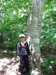 蕪山の株杉とコシアブラ大木_e0064783_05150346.jpg