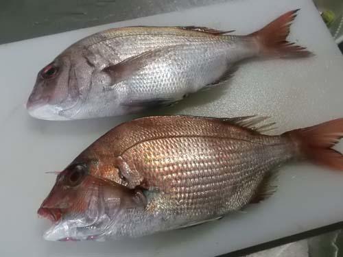 秋田産真鯛の塩焼き&おから煮_f0019498_18335298.jpg