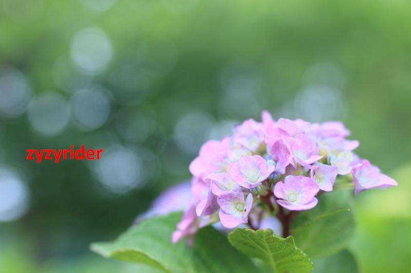 a0329801_18113512.jpg