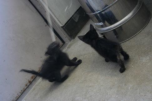【移動先募集】センター(支所)収容の子猫・成猫(6/10訪問)_f0242002_19485919.jpg
