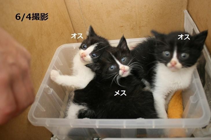 【移動先募集】センター(支所)収容の子猫・成猫(6/10訪問)_f0242002_19490749.jpg