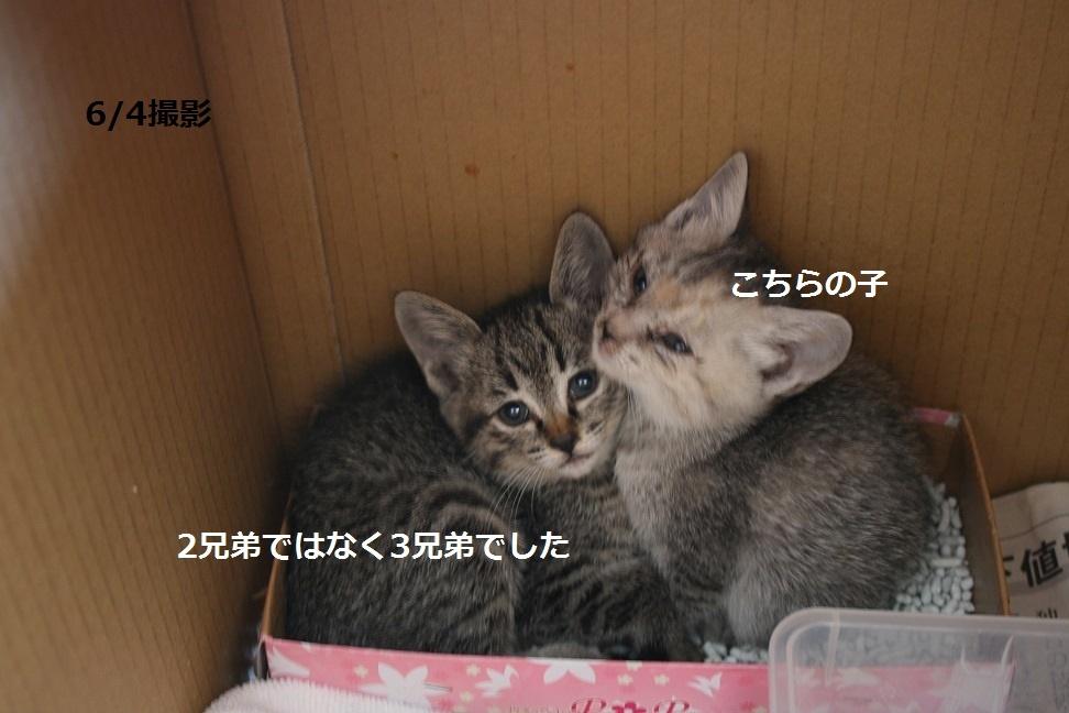 【移動先募集】センター(支所)収容の子猫・成猫(6/10訪問)_f0242002_19491510.jpg