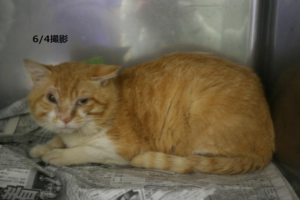 【移動先募集】センター(支所)収容の犬猫(6/17訪問)_f0242002_19494995.jpg