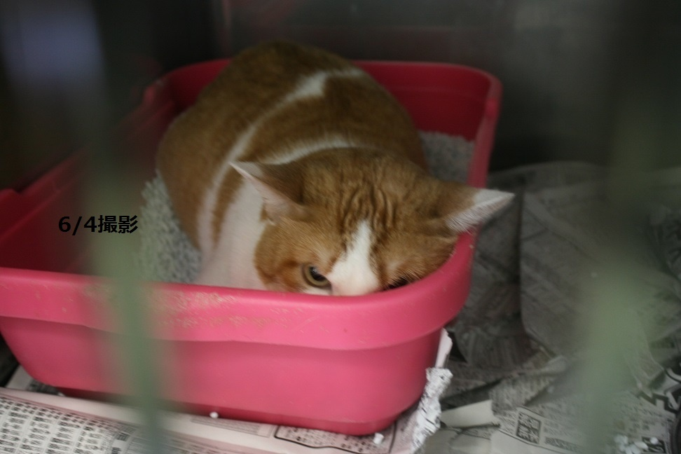 【移動先募集】センター(支所)収容の犬猫(6/17訪問)_f0242002_19495930.jpg